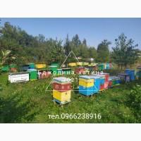 Бджолопакети+доставка