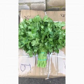 Продам зелень в ассортименте