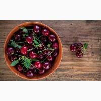 Вишня оптом садова 2018 на заморозку