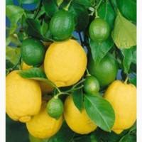 Продам лимоны