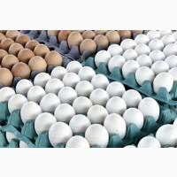 Продтовары Днепр. Яйца высший сорт Днепр