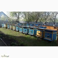 Продам пчелосемьи ( или полностью пасеку 65 семей )