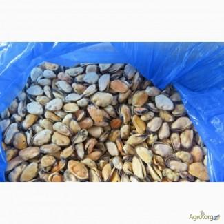 Мидии Чили 200-300 шт/кг