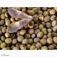Насіння сої Валюта (Valuta)