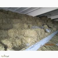 Продам солому пшеничну в тюках