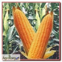 Купуемо Кукурудзу с хозяйств та єліваторів