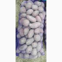 Продам картошку Белла Росса, Сантэ, Альвару, 5грн/кг, доставка Киев от3х сеток бесплатная