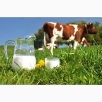 Продам домашнее коровье молоко