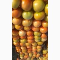 Продам томаты от производителя из Египта