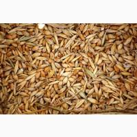 Куплю зерновые, бобовые. Продать некондицию, зерноотходы