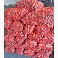 Морковь Абако крупным и мелким оптом со склада в Харькове