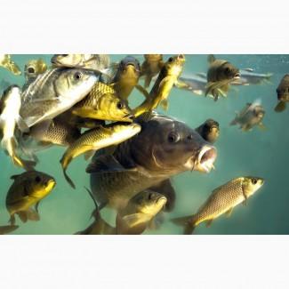 Продам рыбу речную