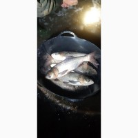 Товарна риба толстолоб