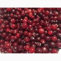 Продам очищені ягоди Клюкви журавлини