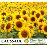 Семена подсолнечника Клариса КЛ, Caussade (Франция)