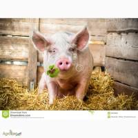 Корм для свиней от производителя