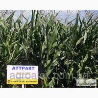 Семена кукурузы Аттракт, Моника, ДН Гарант, ...