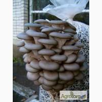 Мицелия грибов