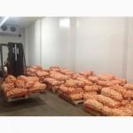 Продам очищенный лук 5-8 см