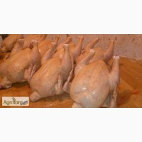 Продаем цыплят-табака
