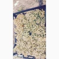 Продам виноград кишмиш. Прямые поставки из Турции