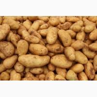 В больших объёмах куплю картофель