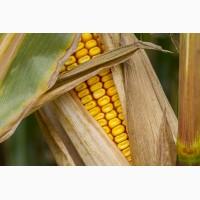 Продажа материала для посева (кукуруза, подсолнечник)