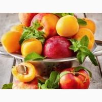 Продам оптом косточковые фрукты из Греции