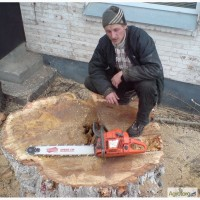 Спил деревьев Киев. Удаление пней, вывоз веток