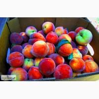 Гофролоток для персика (двухрядка)