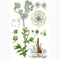 Лабазник (гадючник, таволга) трава і коріння