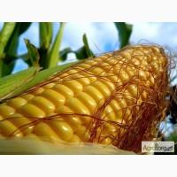 Куплю кукурузу и отходы самовывоз
