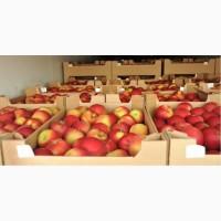 Яблоки экспорт