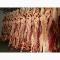 Продаємо м#039;ясо яловичина, напівтуша