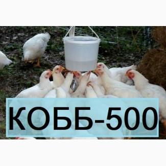 КОББ 500. Бройлер Кросс Кобб-500 из Венгрии. Выход от 80% цена 13 грн