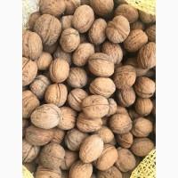 Продам орех грецкий в скорлупе калибр 28+ Выход ядра до 40%
