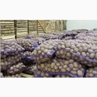 Продам картофель опт без гнили