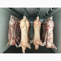 Продам м'ясо яловичини