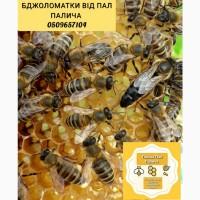 Пропоную ПЛІДНІ бджоломатки Карпатки чистопородні, високопродуктивні по хорошій ціні