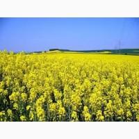 Закупаем мёд из РАПСА дорого, Днепропетровская, Херсонская, Николаевская и Кировоградская