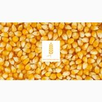 Продаем Кукурузу (база)