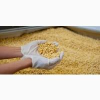 Куплю сою ГМО без ГМО. Вся Украина