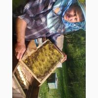 Продам бджолопакети 300шт. і бджолосім#039;ї 100шт