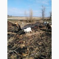 Сыр - творог козий нежирный самый полезный от холестерина, вкусный и сладкий в Украине
