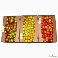 Гофролоток для яблок