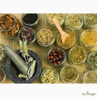 Продам оптом лекарственные травы, Одесская обл