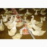 Комбикорм для уток и гусей ПК 22-2 от (3 до 8 недель) РОСТ