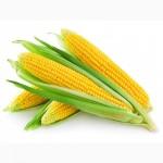 Компания предлагает к реализации Кукурузу (3 класс)