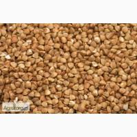 Продам семена гречки: сорт Воля