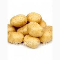 Предзаказ картофеля на 2018 год в продаже для экспорта и личных целей